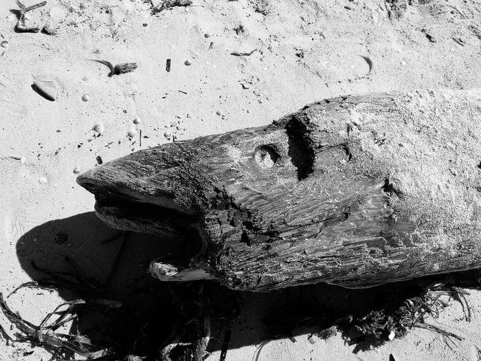 Wooden Texture Animal Themes Fish Made Of Wood Sunlight Sand Day Outdoors No People
