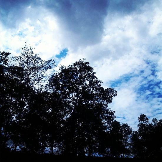 Trees Beautiful Day Cloudporn Sky
