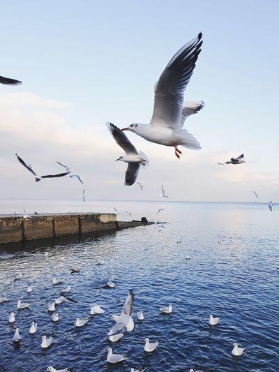 Flying Bird Animals In The Wild Animal Wildlife Sea Animal Seagull