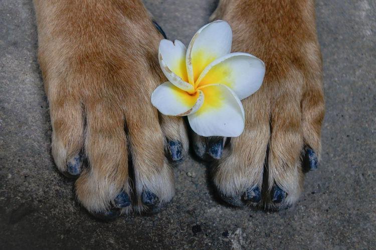 Plumeria Dog