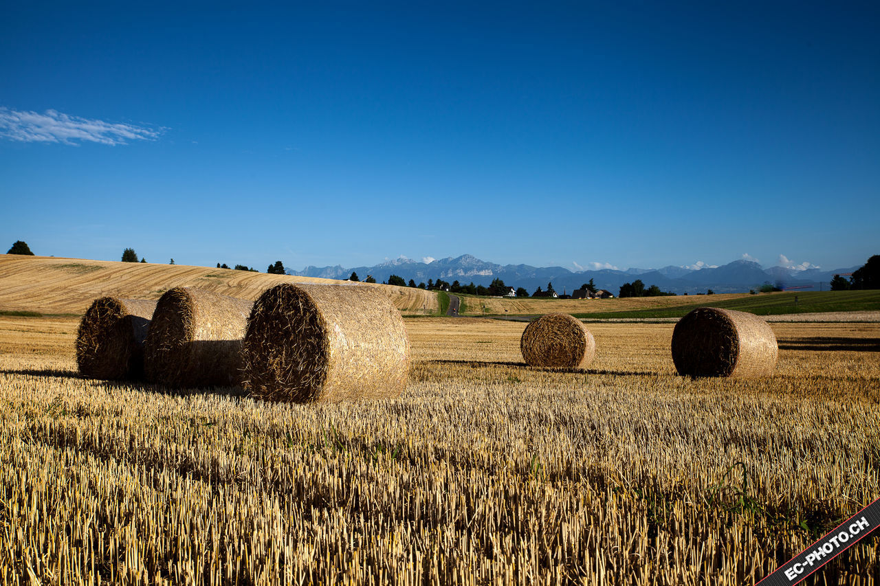 bale, agriculture, hay, rural scene, harvesting, field, hay bale, farm, tranquil scene, rolled up, tranquility, solitude, crop, landscape, outdoors, beauty in nature, scenics, nature, no people, day, clear sky, haystack, blue, mountain, sky