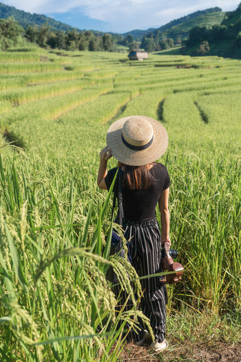 Back Travel Chiang Mai | Thailand Thailand Woman Portrait Rice Paddy Green Color Hat Field Landscape Agriculture Rural Scene Farm Land Clothing Plant One Person Rear View Crop  Farmer Real People Growth Adult Nature Women Environment Outdoors Tea Leaves