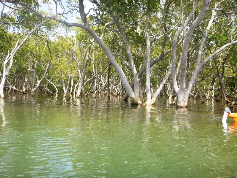 Beauty In Nature Canoe Mangrove Nature Port Macquarie Reflection River Scenics Swamp Tranquility Water