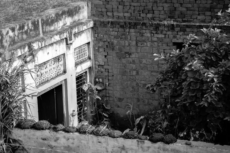 These walls with moss and algae growing on it tell a story. A story of a simple farmer living in this house since a long time in sheer bliss and content and not wanting to move away. EyeEmNewHere Black And White Friday Windows Window Rural Scene Plant Outdoors Nature House Built Structure Building Exterior Architecture Rustic Home
