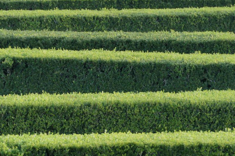 Grass Full