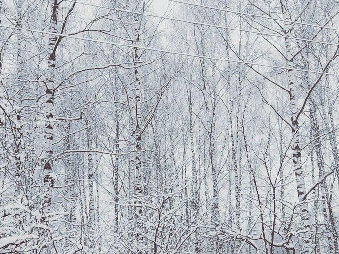 #2016 Winter Snow ❄ Snowtree Beautiful Nature