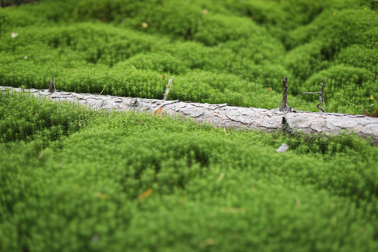 Tree trunk into the moss, into the wild Bark Freshness Mossy Pure Tree Trunk Beauty In Nature Close Up Close-up Day Fresh Green Color Growth Landscape Moss Nature No People Outdoors Scenics Tilt-shift Tranquil Scene Tranquility Tree Trunk Wild Wilderness