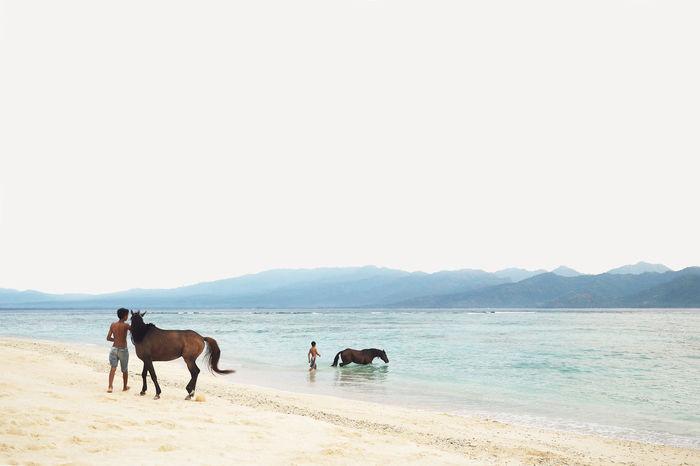 Bathe Beach Horse Horses Landscape Old Olympus Sand Sea Sky Travel The Photojournalist - 2017 EyeEm Awards