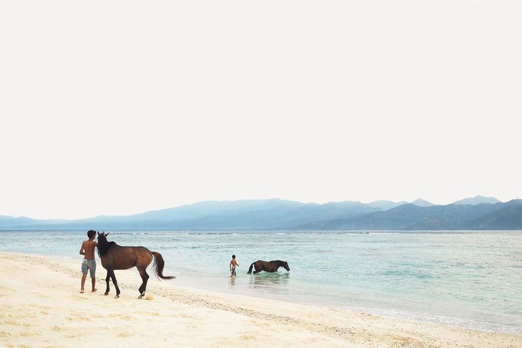 Horses on beach against clear sky