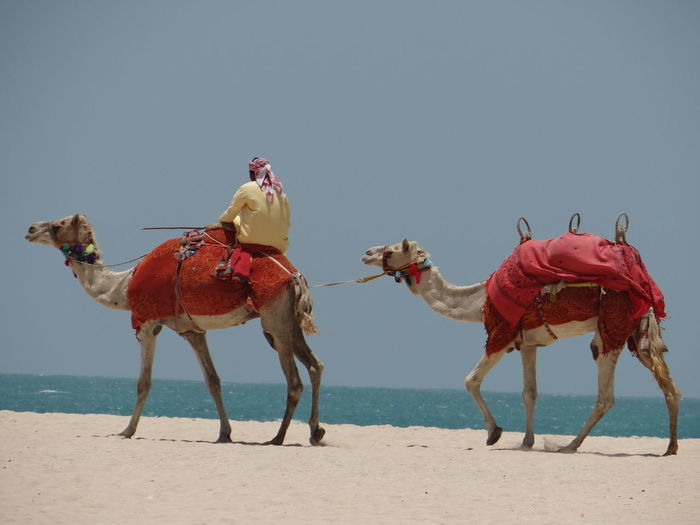 Animal Themes Beach Photography Camel Land And People Sand Sky Travel Water EyeEmNewHere