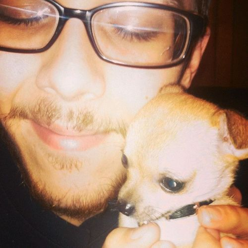 Emily got too close. Friends puppy. IWant Teacupchihuahua Themglassesthough