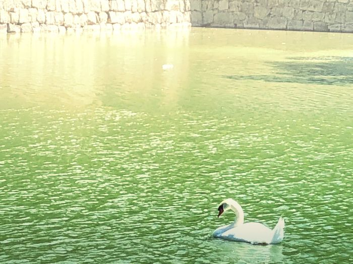Water Lake Animal Themes Swimming Animals In The Wild Day Animal Nature Animal Wildlife Bird One Animal Beauty In Nature No People Sunlight Outdoors Floating On Water