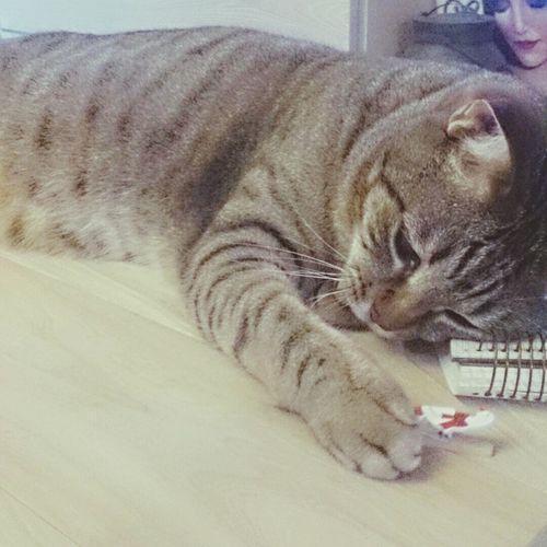 仕事中なので 暇みたいです 会長くん、こっそりクリップをチョイチョイ.. 仕事 愛猫 Ilovecat Cat
