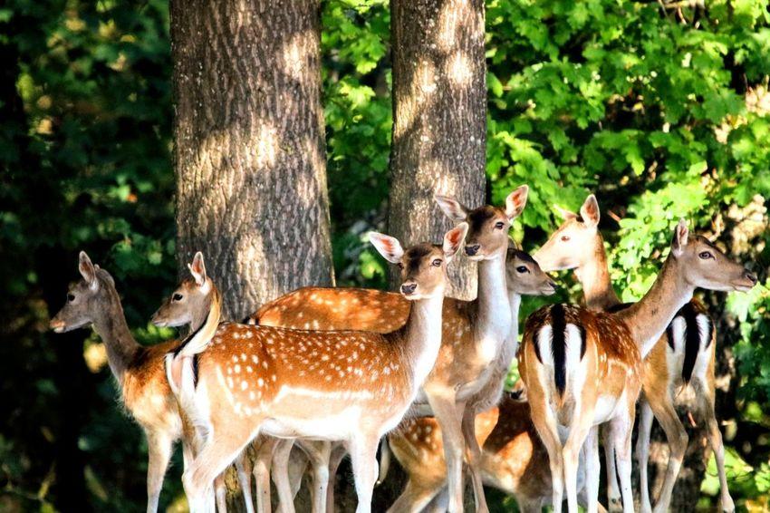 Rot wild Rudel Rotwild Autumn Germany🇩🇪 Animal Wildlife Animal Photography EyeEm Selects Tree Tree Trunk Forest Animal Themes Close-up