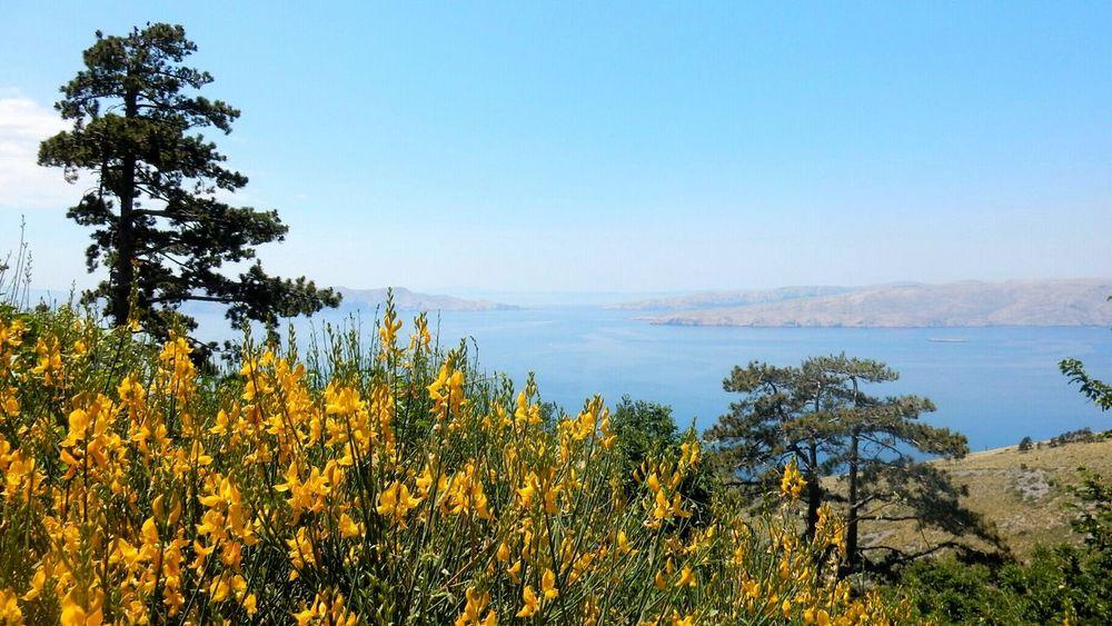 Beauty In Nature Landscape Sea Ginestre EyeEm Nature Lover EyeEm Best Shots 😍😍😍 Beautiful