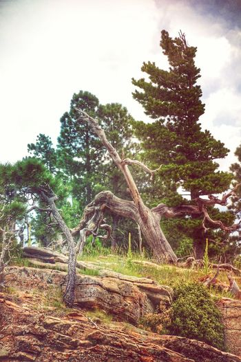 A bit more Treegasmic Tuesday ... Another from the Mogollon Rim in Arizona America Coast To Coast TreePorn EyeEm Nature Lover Mextures EyeEm Best Edits