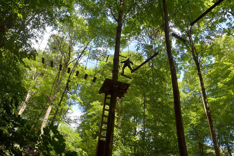 Tree top adventure Adventure Balance Beauty In Nature Beech Forest Branch Challenge Climbing Denmark Experience Forest Adventure Fun Green Color High Up Leisure Activity Lifestyles Low Angle View Nature One Person Outdoors Sky Tree Tree Top Tree Top Adventure Treetop