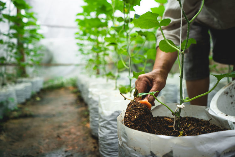 Cropped Image Of Person Planting Plants In Greenhouse