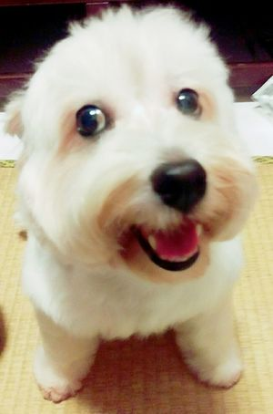 My_family I Love My Dog Chi-wei Smile Hi! Taking Photos Children The Most Beautiful Gift 你說什嘛~~~~~~~(很平常的照片,但是看到都會覺得好笑😂😂😂) 繼薇