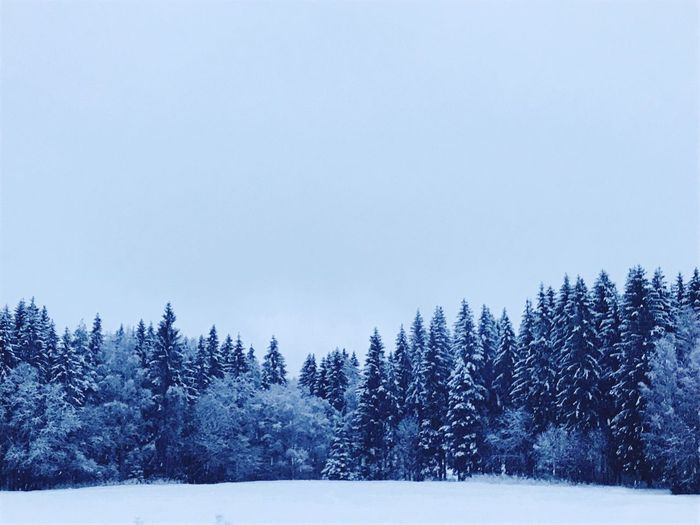 Winter in Norway Forest Blue Norway Snow Cold Temperature Winter Tranquil Scene Nature Tranquility Beauty In Nature No People Scenics Outdoors Tree Sky Clear Sky Landscape Day