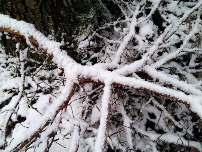 snow covered branches Outdoors Day Coldday Snowy Snowy Trees Branch Snow Covered In Snow Covered Winter Winter Wonderland Wintertime Branches Forest Ground White Color