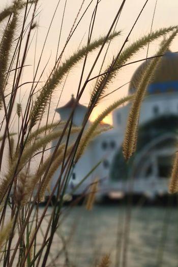 Mosque Bocah