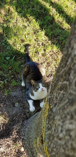 Cat Morning Sun Feline Domestic Animals Shadow Low Section Sunlight High Angle View Grass