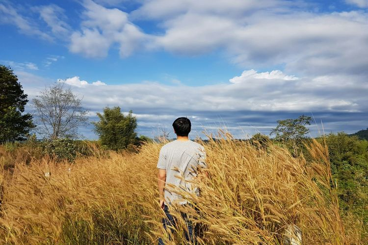 Rear view of man looking at field against sky