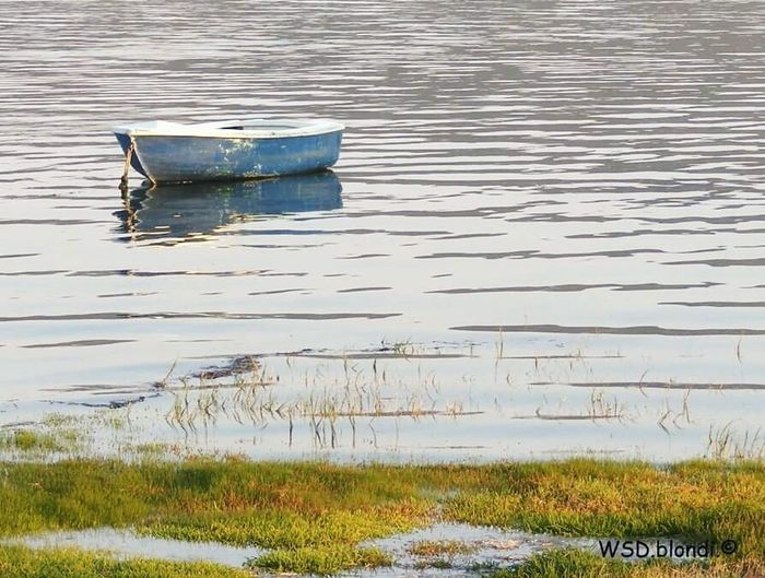 Abandoned Boat Blue Boat Calm Water Water Plants End Of The Day Peaceful Calm Nature