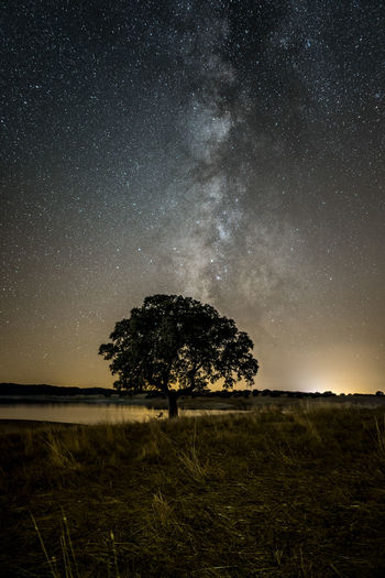 The traditional tree of Alentejo region, in Portugal, is one of my favorite subjects to photograph landscapes. When I saw this one, I knew I had to capture it with the Milky Way on background! Grass Portugal Astronomy Beauty In Nature Environment Galaxy Idyllic Landscape Milky Way Galaxy Milkyway Nature Night No People Non-urban Scene Outdoors Plant Scenics - Nature Sky Space Star - Space Tranquil Scene Tranquility Tree