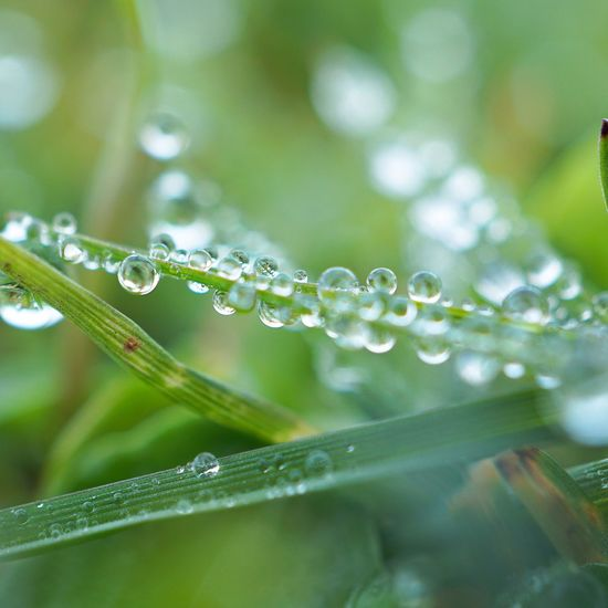 the raindrops on the green grass plant in the garden Grass Plant Green Rain Raindrops Drops Water Garden Nature Beauty In Nature Beautiful Romantic Light Bright Colorful Fresh Freshness