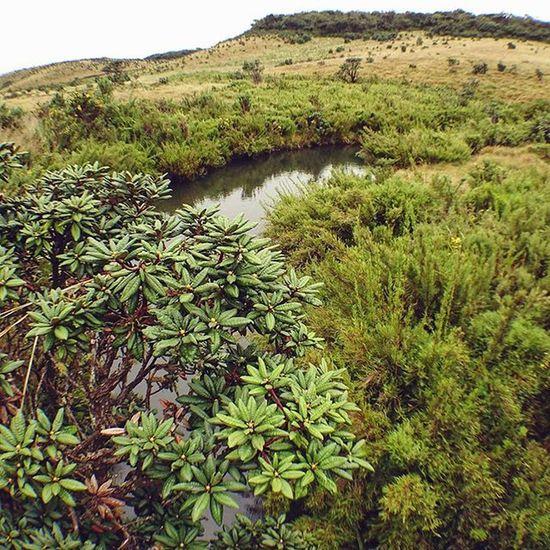 意料之內的無乜好睇... 滿山都中國人...... Horton Hortonplains Nanuoya Nuwaraeliya plains national nationalpark