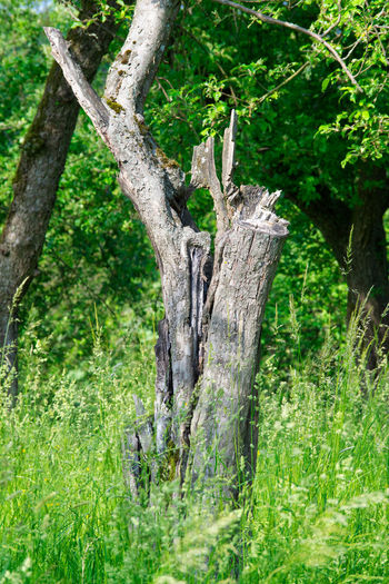 View of lizard on tree trunk in forest