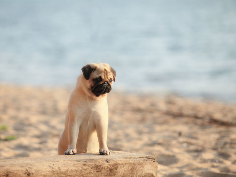 Animal Themes Beach Day Dog Mammal Nature No People One Animal Outdoors Pets Sand Sea Sky