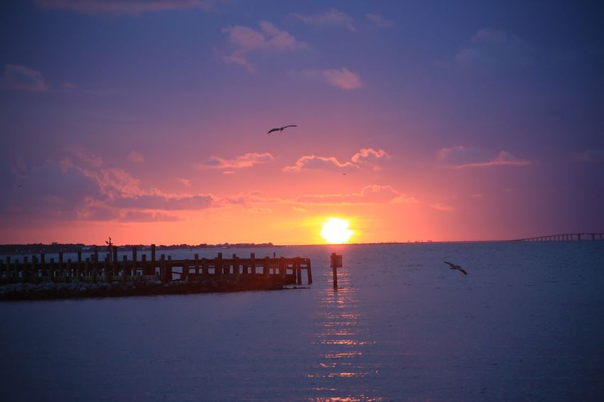 Pelican Pier Clouds Ocean Fort Morgan Alabama Mobile Bay Sky Sunset Bird Water Animal Themes Animal Vertebrate Sea Animals In The Wild Animal Wildlife Scenics - Nature Beauty In Nature Flying Group Of Animals Tranquility Sun Tranquil Scene Nature Silhouette No People