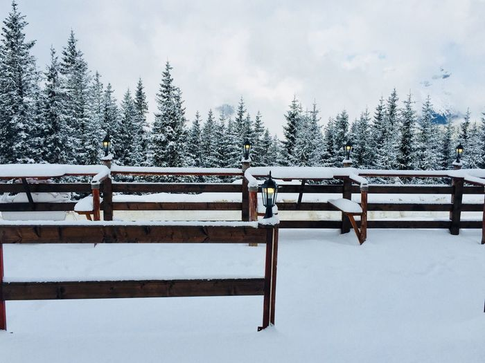 Wooden fence surrounded by forest of pine cone trees covered in snow Nobody Landscape Trees Evergreen Forest Trees Wooden Fence Snow Winter Cold Temperature Snow Winter Weather Tree Nature Railing Wood - Material Sky Outdoors Day No People Beauty In Nature Landscape Scenics