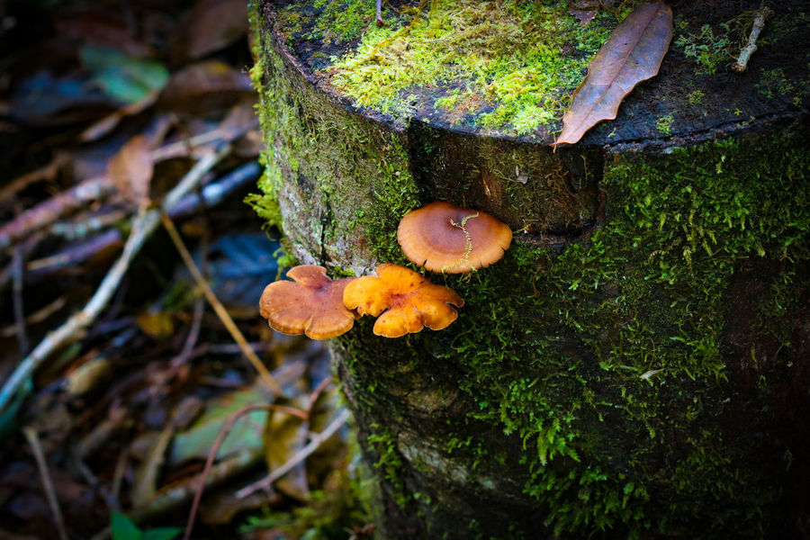 fungus Fungus Mushroom Mountain Naturephotography Outdoors Natureshots Nature_good Earthgallery Colors Tree Tree_magic Natureworld_photography Green Color Green Nature Day Toadstool Close-up Tree Trunk Growth Beauty In Nature No People Forest Fly Agaric Mushroom Freshness Fly Agaric