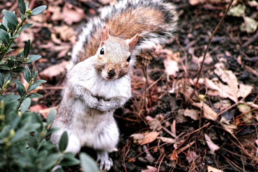 Squirrel Animal Cute