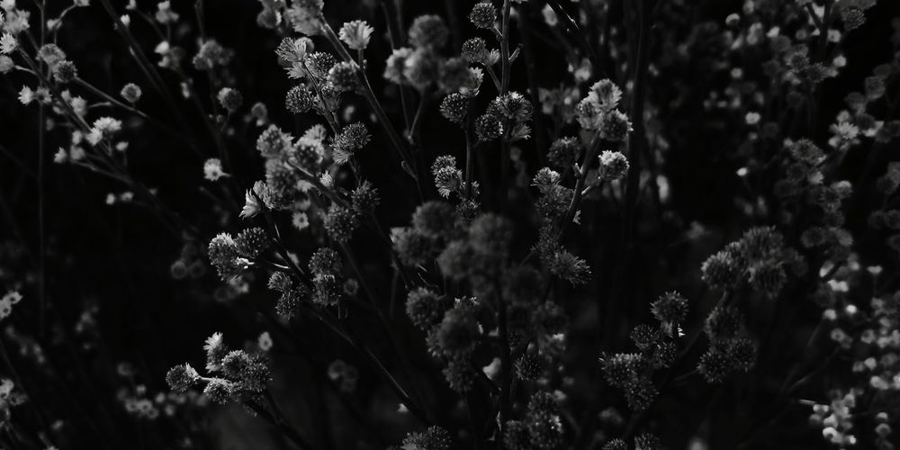 Blac & Wyte Blackandwhite Beauty In Nature Beautiful Flower Leaf Beauty Close-up Plant Plant Life