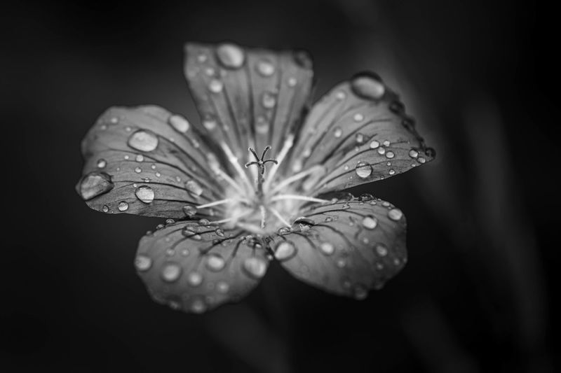 Dark Drops