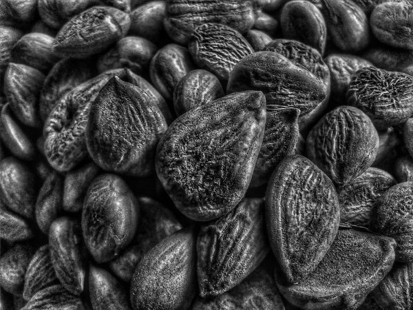 Apricot seeds Seeds Seed Nature Black And White Backgrounds Black And White Collection  Day Black And White Photography Full Frame Large Group Of Objects Abundance Heap Natural Pattern No People Freshness Repetition Detail Organic Food Food Photography Black Apricot Focus On Foreground Showcase July Photography