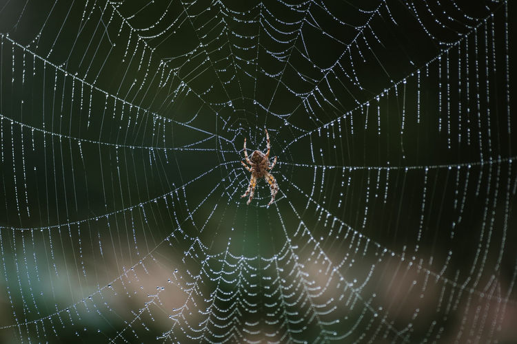 Spider Web Spider Spiderweb Spiders Spider Nature_collection Eyenaturelover Spider Webs Nature Morning