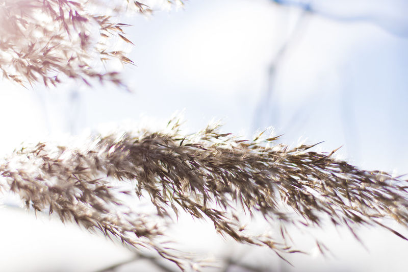 Caught In The Wind Natural Light Overexposed Soft Sunlight Winter Beauty In Nature Close Up Close-up Day Defocused Direct Light Flower Flower Head Fragility Freshness Nature Nature_collection No People Outdoors Plant Soft Focus Softness White White Background