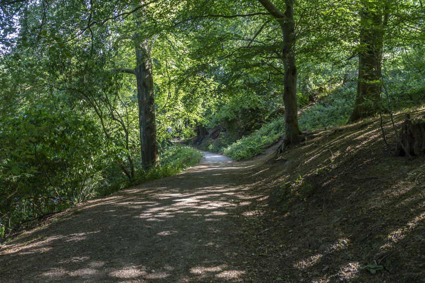 Beauty In Nature Day Diminishing Perspective Direction Dirt Footpath Forest Growth Land Nature No People Non-urban Scene Outdoors Plant Road Scenics - Nature The Way Forward Trail Tranquil Scene Tranquility Tree WoodLand