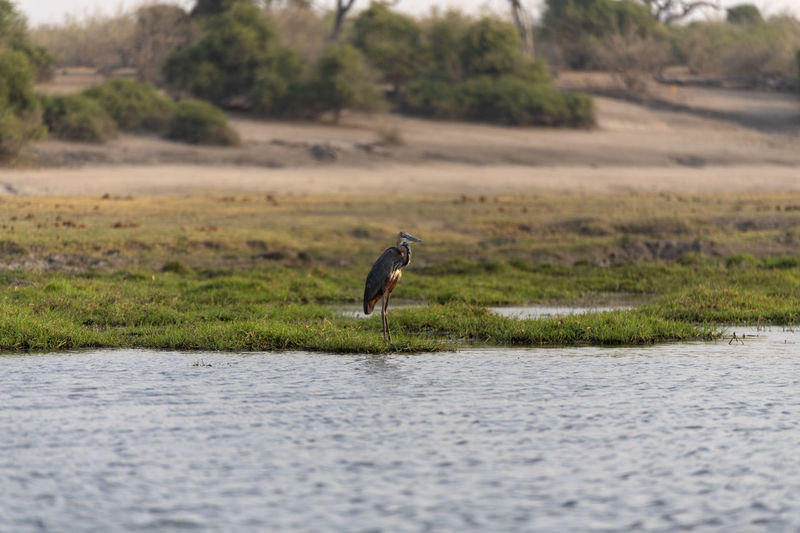 View of a bird on water