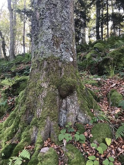 Beauty In Nature Day Forest Grass Green Color Growth Landscape Moss Nature No People Outdoors Scenics Tranquil Scene Tranquility Tree Tree Trunk Water