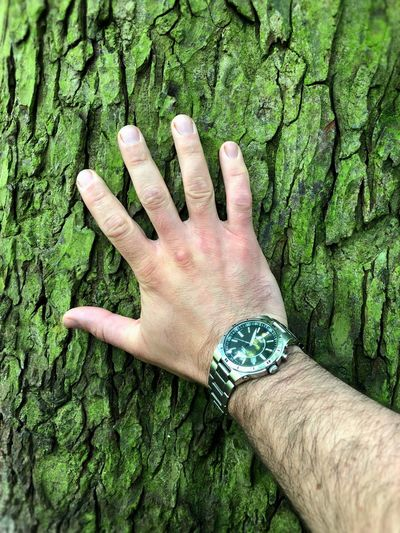 Close-up of person hand on tree trunk