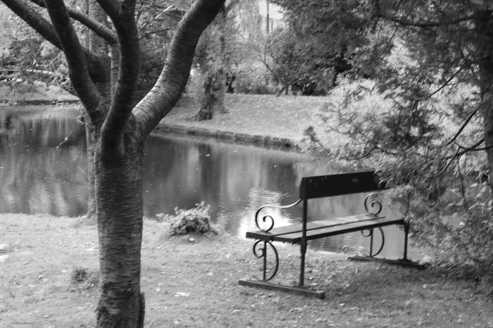 A lonely bench in the park Nygårdsparken Bergen Norway Bench Tree Absence Solitude Park Bench Pond Outdoors Nature Reflection Park Autum No People Tranquility Blackandwhite Noedit Nofilter Canon Canonphoto Canonphotography Canoneos750d