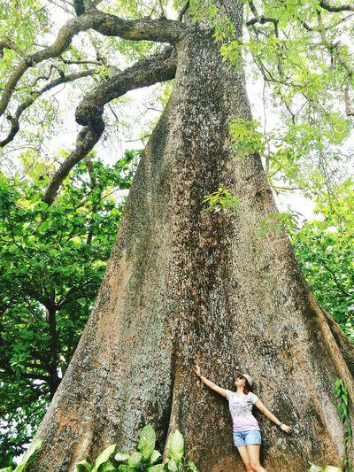 Old Tree Nature Break The Mold EyeEm Diversity Reaching Goals EyeEm Vison #FREIHEITBERLIN