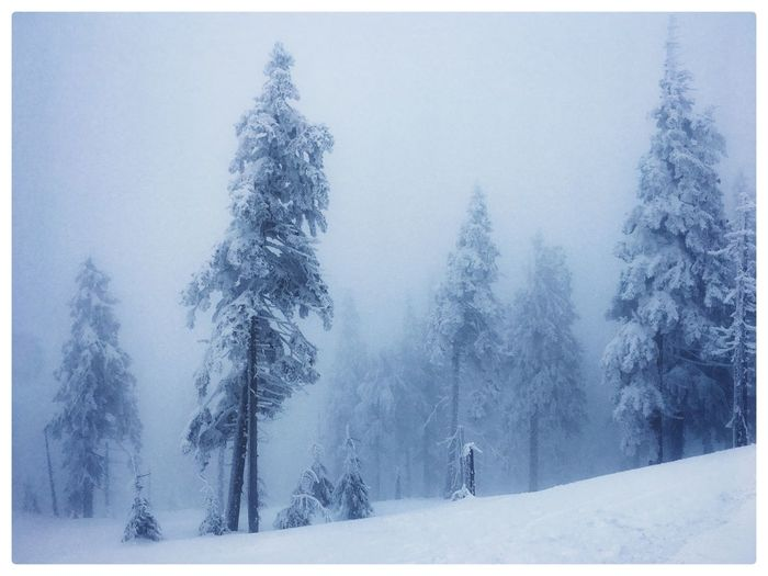 Winter landscape Snow Winter Cold Temperature Tree Beauty In Nature Tranquility Plant Nature Land Tranquil Scene Scenics - Nature Fog Auto Post Production Filter Day Covering Forest Transfer Print Sky Environment Outdoors Snowing Coniferous Tree Pine Tree Extreme Weather